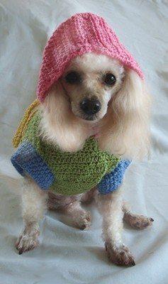 crochet dog hoodie