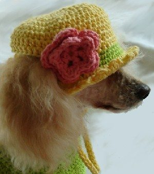 crochet pet hat Crochet on Etsy: Dog Sweater and other crochet pet patterns