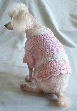 crochet puppy sweater