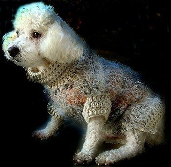 il 570xN.188325675 Crochet on Etsy: Dog Sweater and other crochet pet patterns