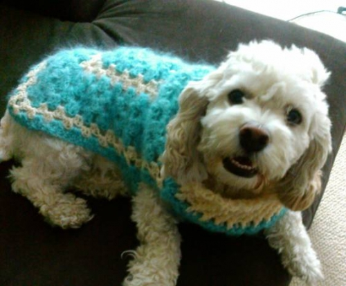 pet crochet 500x413 100 Unique Crochet Shirts and Sweaters