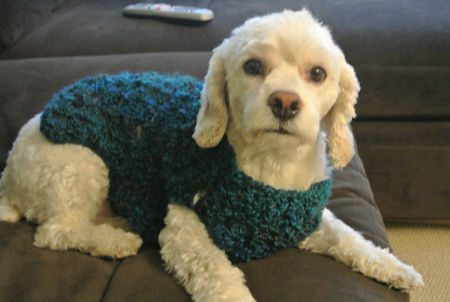 Post image for A New Crochet Doggie Sweater for Betty