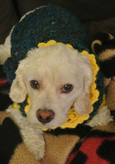 pet crochet A New Crochet Doggie Sweater for Betty