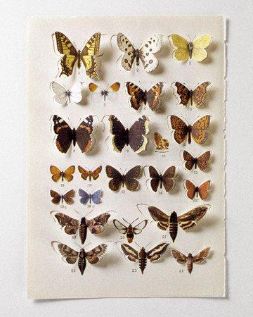 butterflies Conceptual Crochet Artist Anu Tuominen
