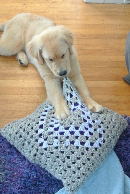 DSC 6663 Puppy vs. Crochet Pillow