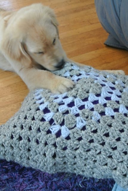 puppy vs crochet pillow