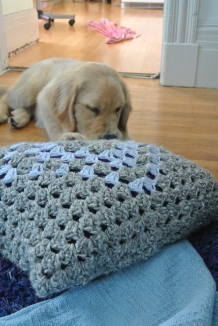 DSC 6666 Puppy vs. Crochet Pillow