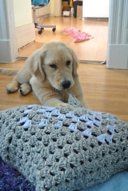 DSC 6667 Puppy vs. Crochet Pillow