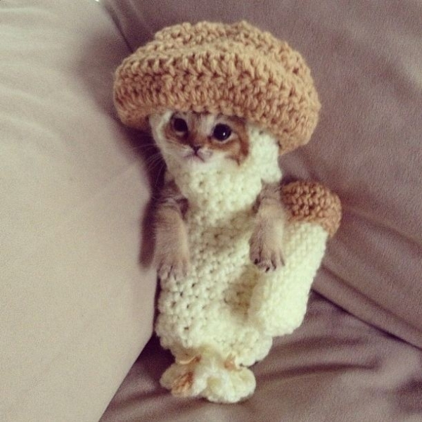 crochet kitten mushroom  600x600 10 Most Adorable Animals Outfitted in Crochet