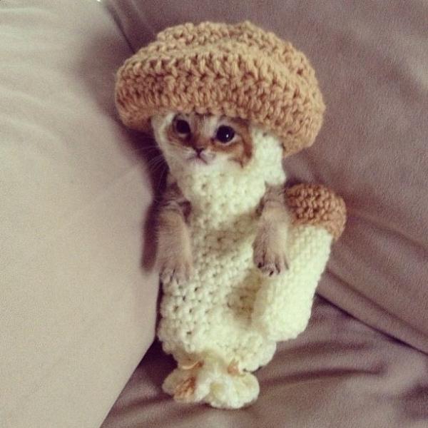 crochet kitten mushroom