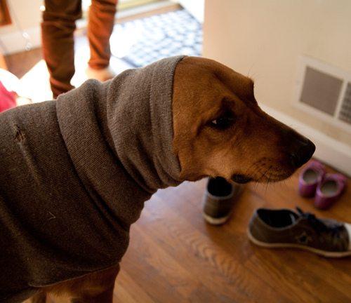 upcycled dog sweater