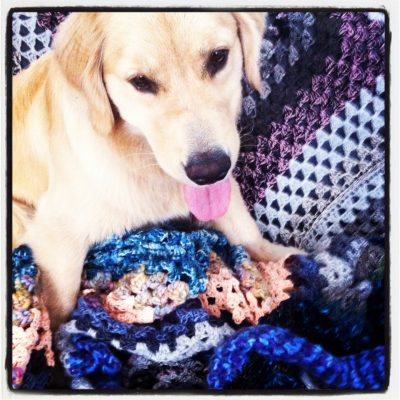 IMG 2865 400x400 puppy crochet