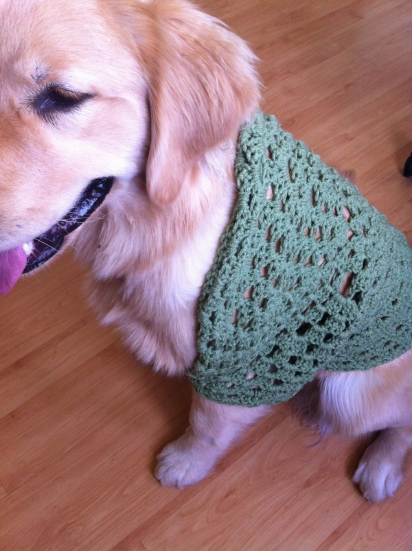 lucy crochet pet shrug