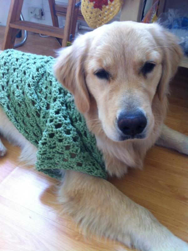 lucy puppy crochet