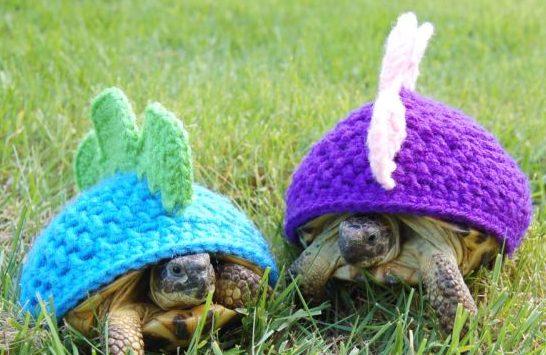turtle shell crochet