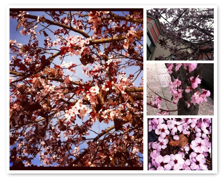 Post image for 15 Beautiful Cherry Blossom Crochet Patterns