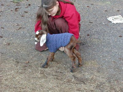 crochet goat sweater 10 Most Adorable Animals Outfitted in Crochet