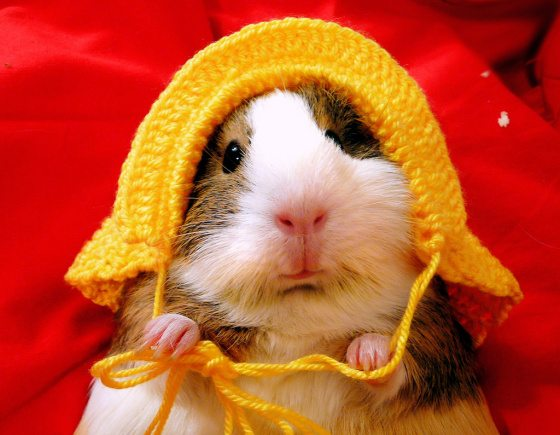 crochet guinea pig hat 10 Most Adorable Animals Outfitted in Crochet
