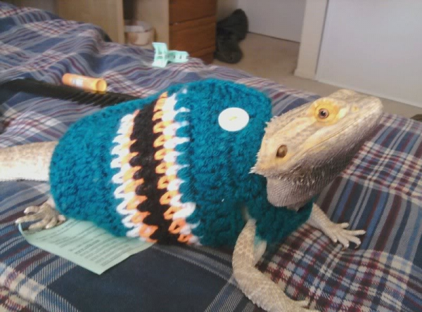 crochet lizard sweater 600x444 10 Most Adorable Animals Outfitted in Crochet