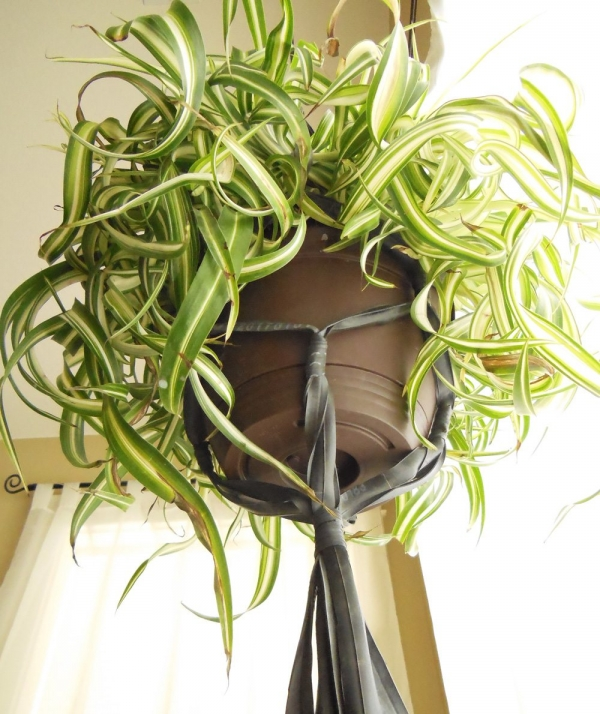 inner tube plant holder