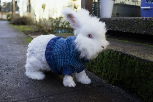 knit rabbit sweater 600x400 10 Most Adorable Animals Outfitted in Crochet