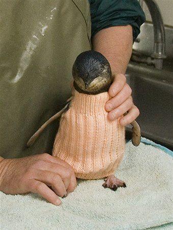 knitted crochet penguin