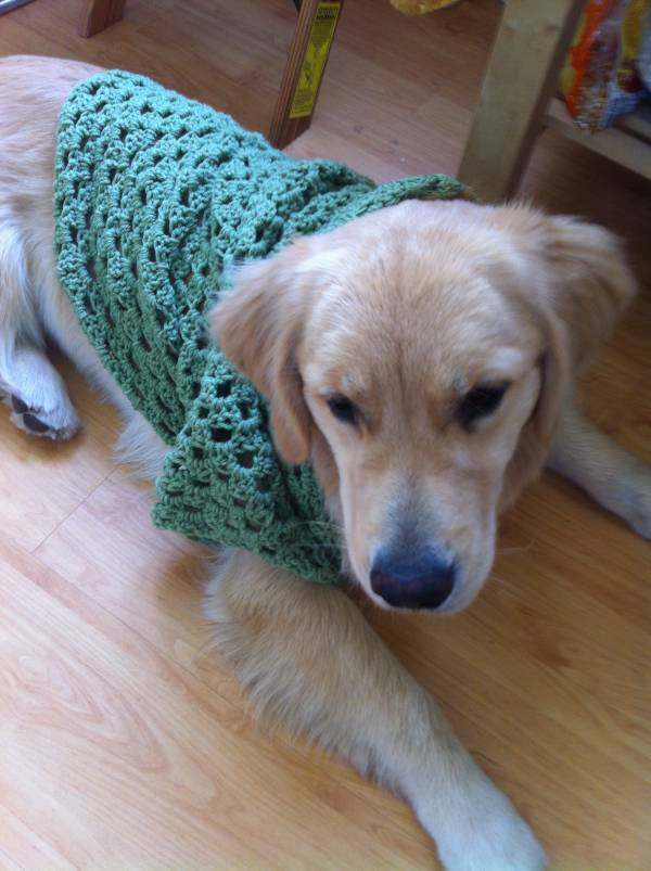 Post image for When Puppy Wears Crochet