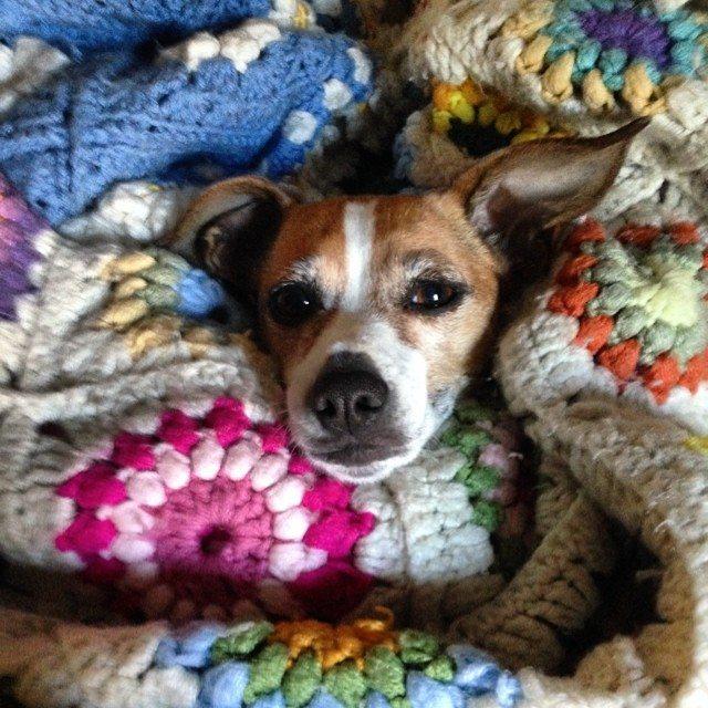 priscillablain crochet pup