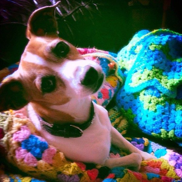 priscillablain_crochet_with_puppy