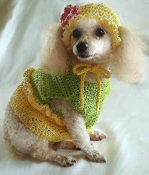 crochet pet pattern