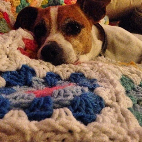 priscillablain_puppy_crochet