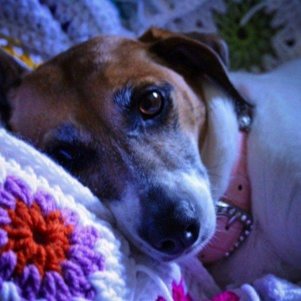 priscillablain_puppy_crochet_2