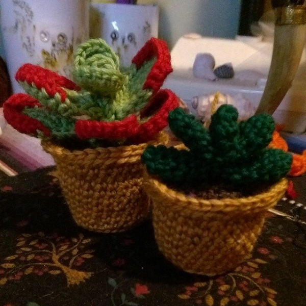 oakherder crochet succulents