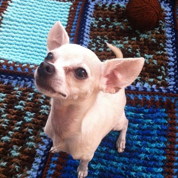 post stitch crochet blanket with puppy