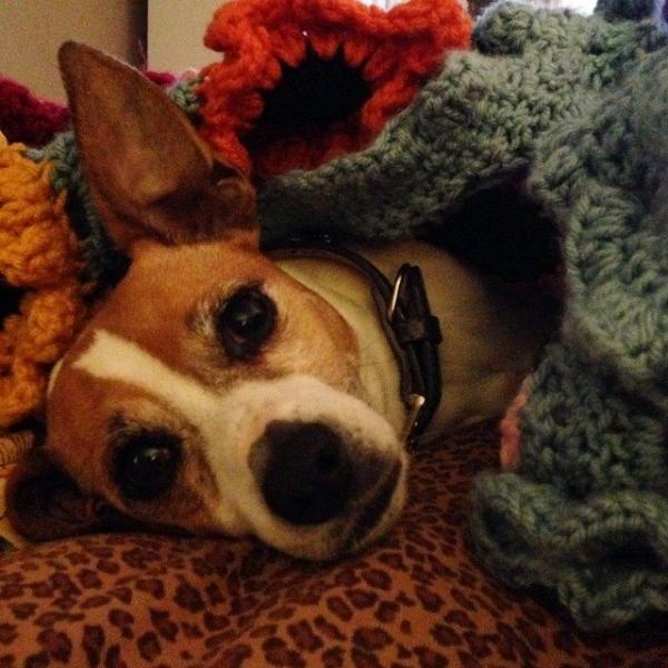 priscillablain crochet puppy blanket