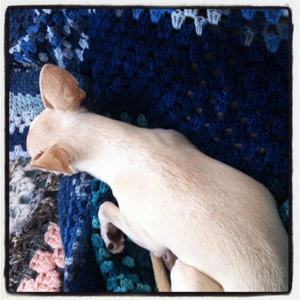 puppy crochet blankets
