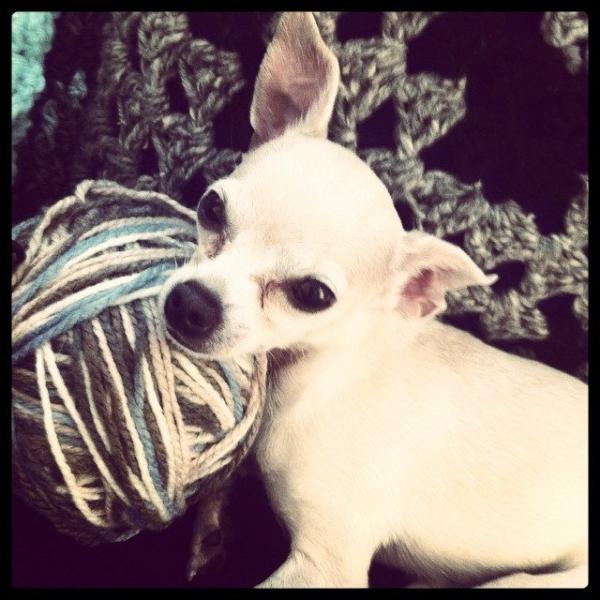puppy with yarn