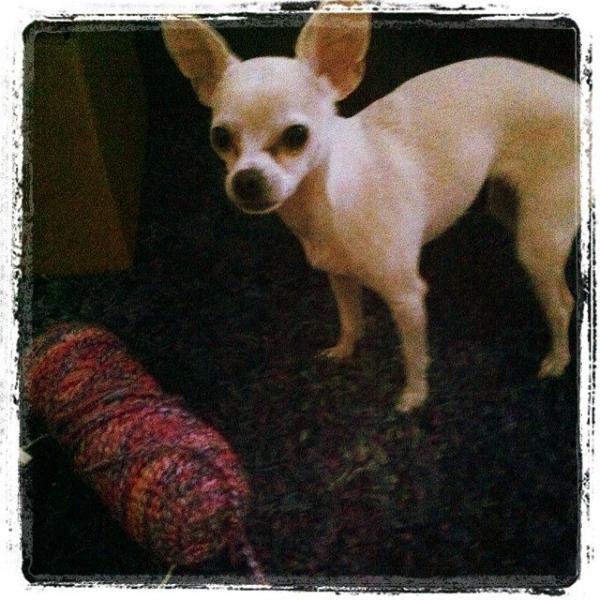 puppy yarn
