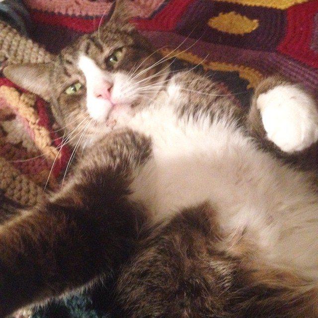 anastaciaknits crochet cat