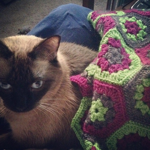 stitchyimpressions crochet blanket with cat