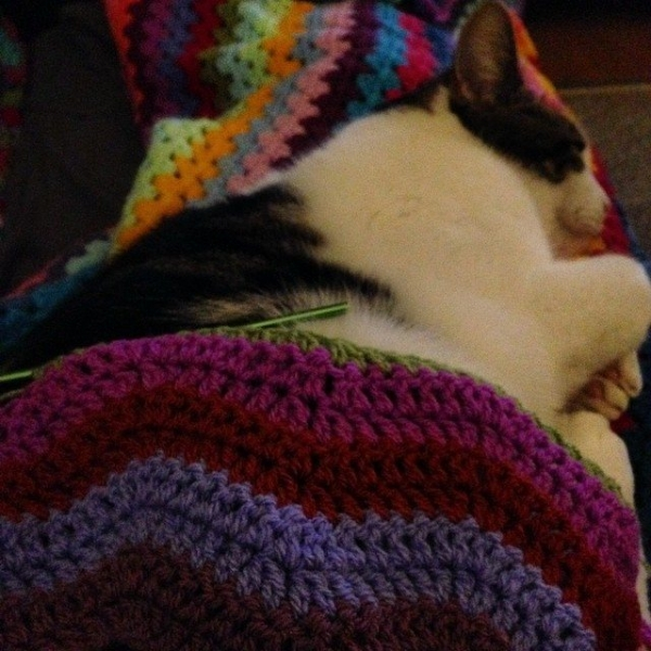 theorsetfinca crochet ripple blanket with cat