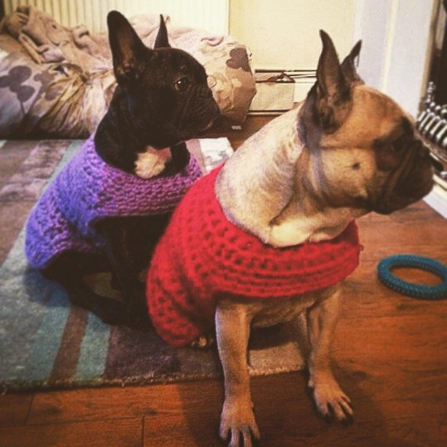 cozamundo crochet dog coats