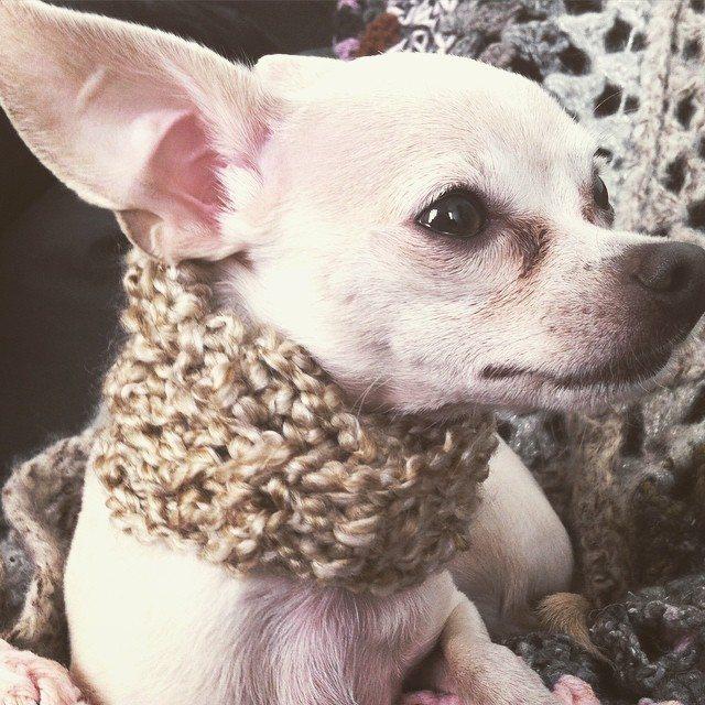 crochet puppy cowl