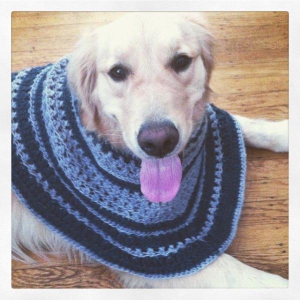 crochet puppy poncho