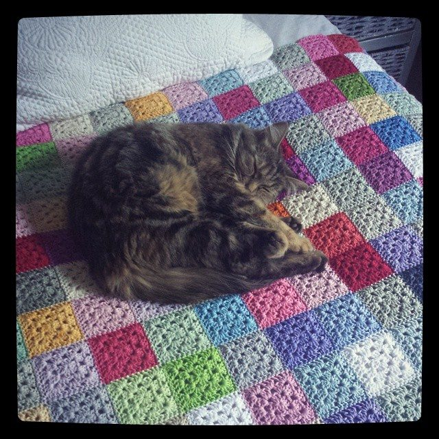 hookybren kitty on crochet blanket