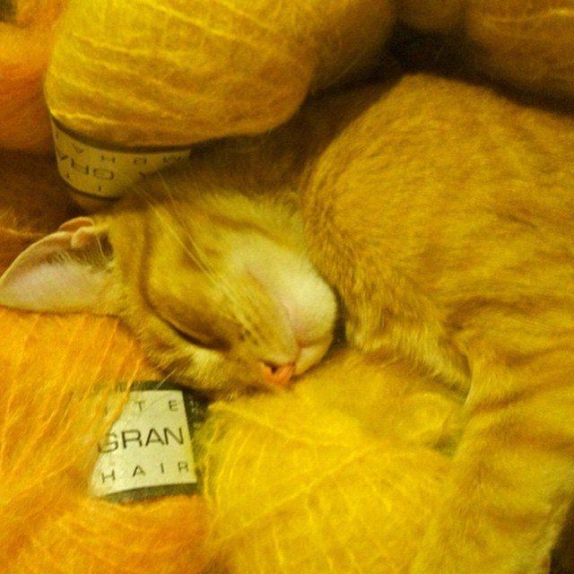 lisesolvang cat yarn