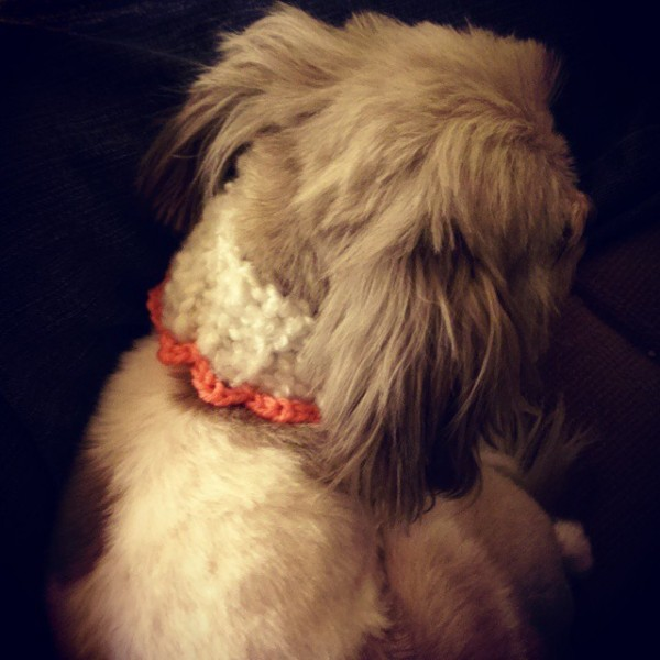 mlissabethgr crochet puppy cowl