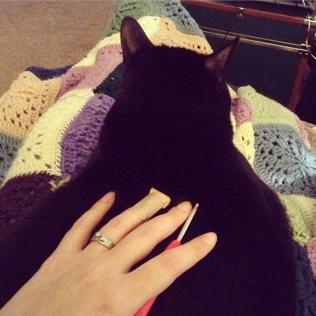 stitchyimpressions cat on crochet
