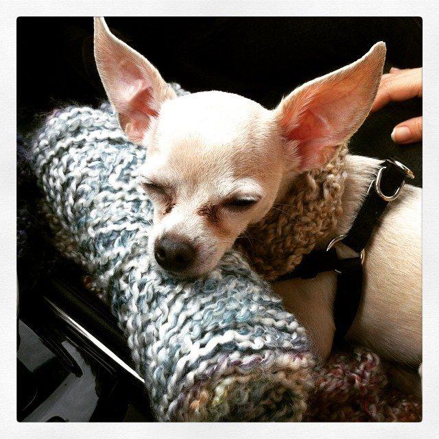 yarn puppy