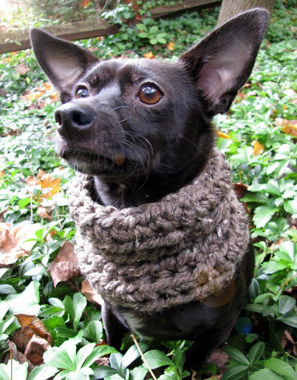 crochet dog cowl